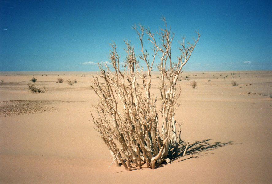 Mauritania 5T2AI DX News Sahara Desert.