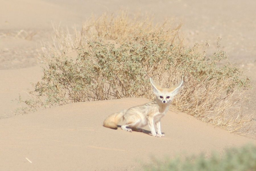 Mauritania 5T4C Tourist attractions spot Fenec.