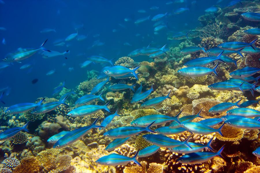 Mauritius Island 3B8/DJ7RJ