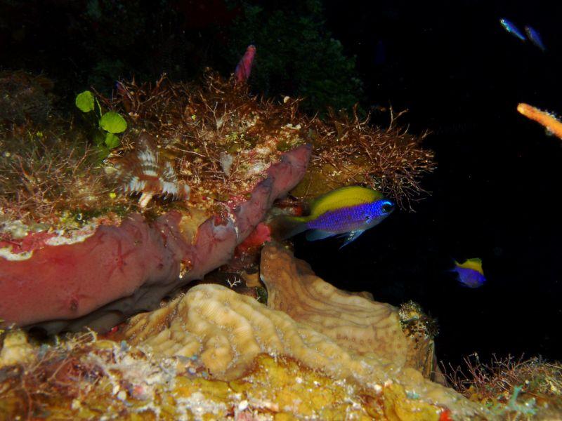 Остров Маягуана C6AUX Туристические достопримечательности