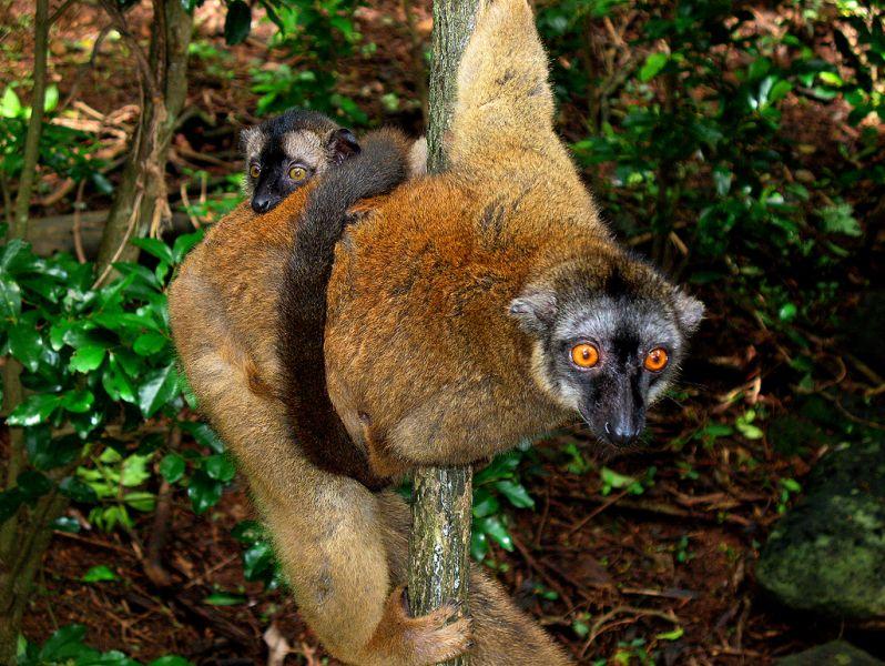 Mayotte Island FH/DL1RPL FH/DL3RKS Tourist attractions spot Maki lemur