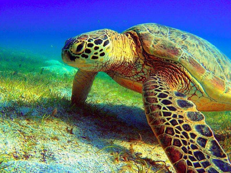 Mayotte Island TX6A