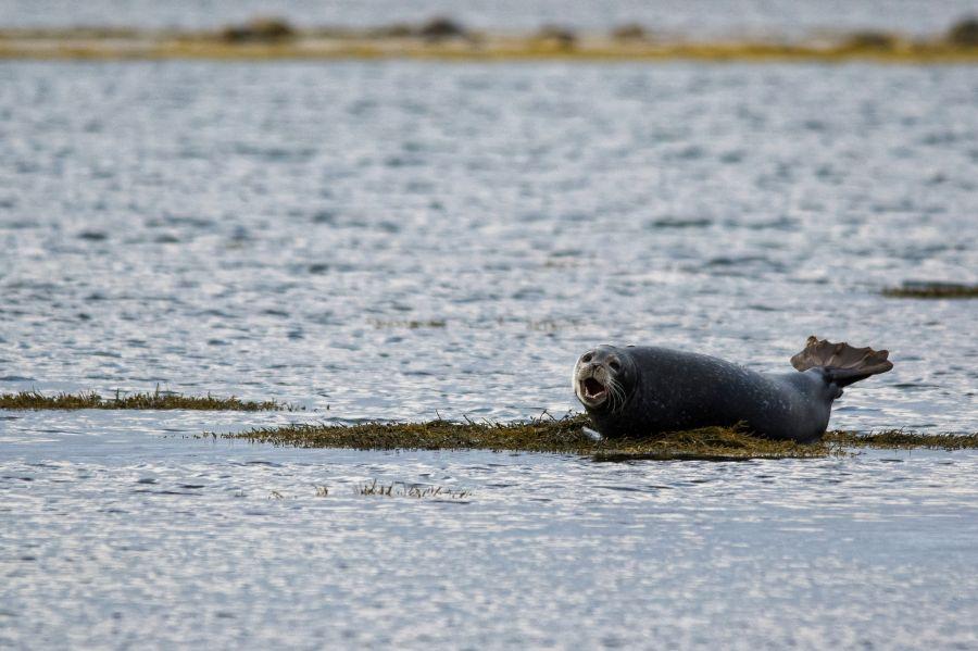 Miquelon Island FP/F6ACH TO200SPM Tourist attractions spot