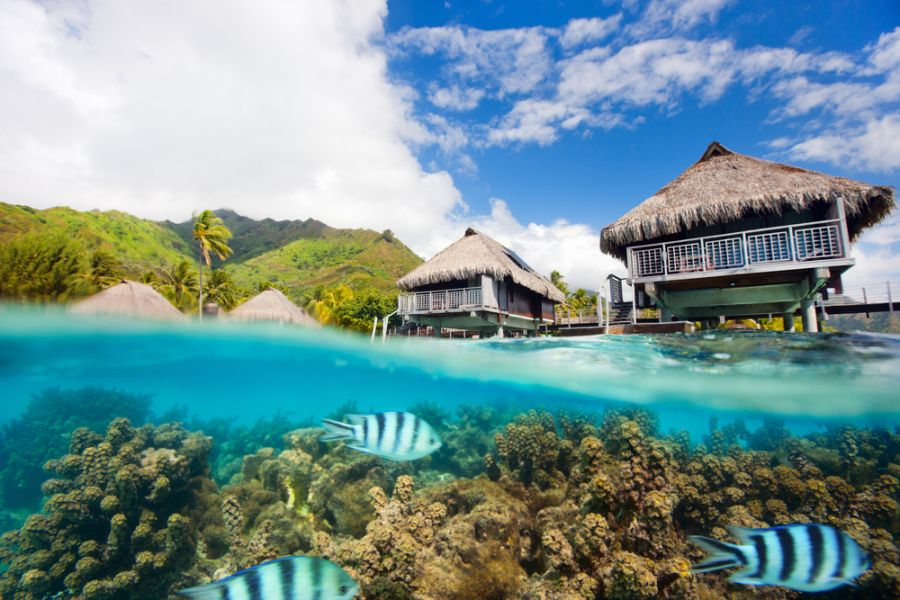 Moorea Island French Polynesia FO/W7YAQ DX News Beautiful above and underwater landscape.