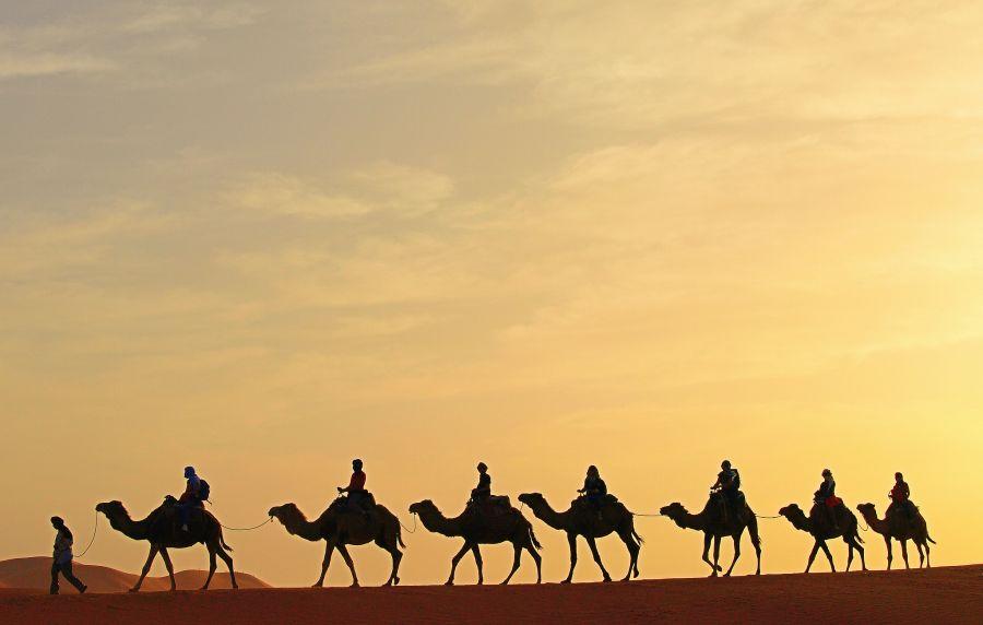 Марокко CN2AY Верблюды Пустыня Сахара.