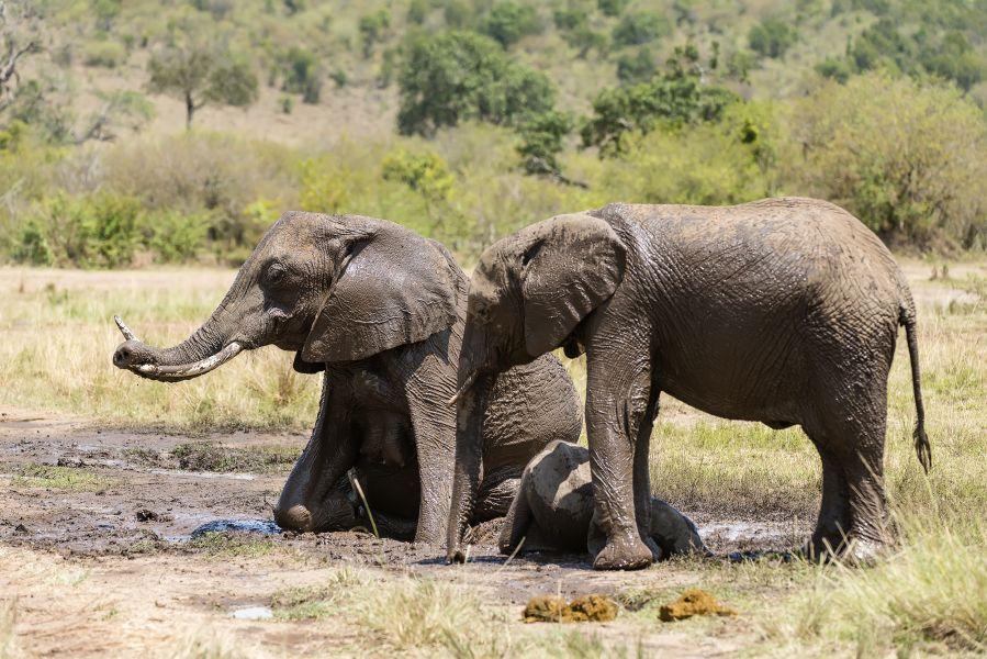 Намибия IARU 2015 DX Новости