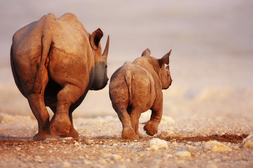 Namibia V5/G3RWF DX News