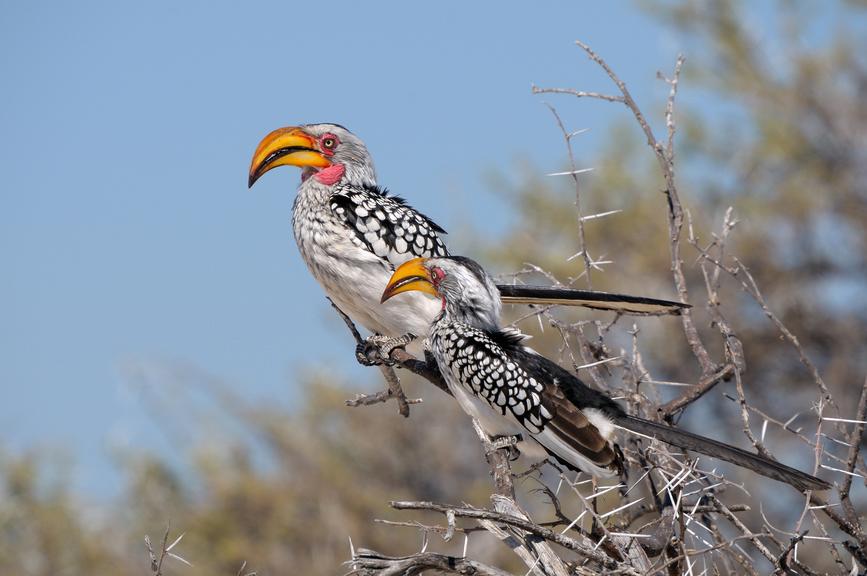 Namibia V5/G3TXF DX News
