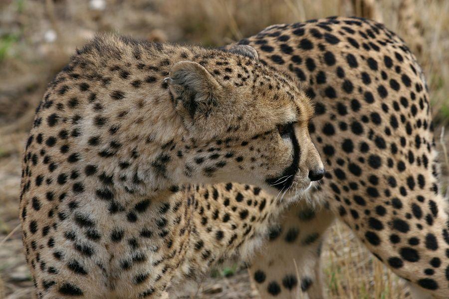 Намибия V5/DJ5IW V5/DJ7JC V5/DJ9RR V5/DJ2HD V5/DJ2LS V5/DJ8VC V5/DL9NDS