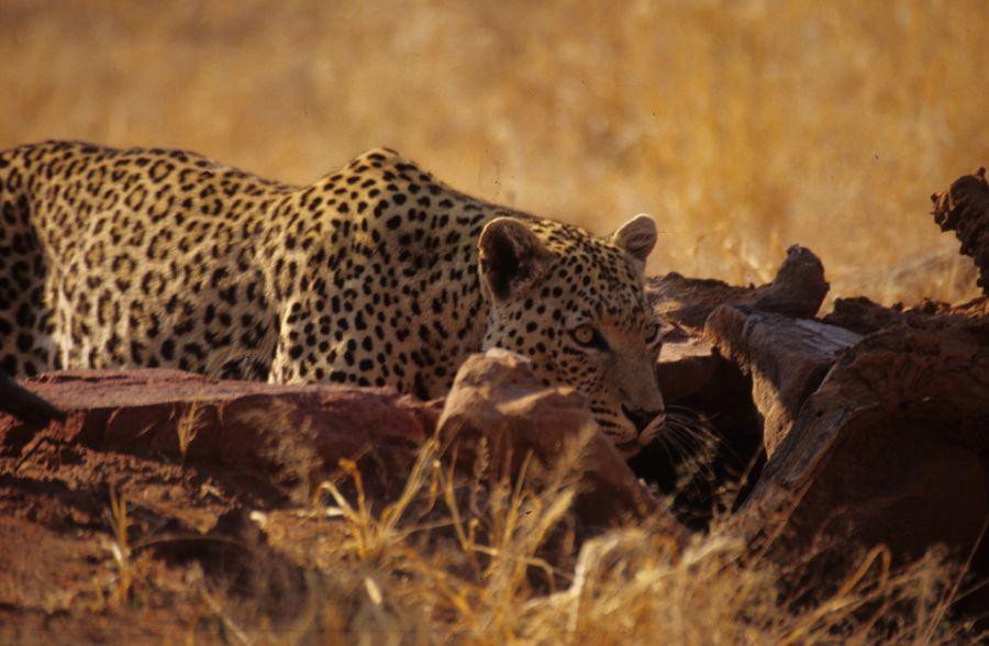 Намибия V5/OE3SZA DX Новости