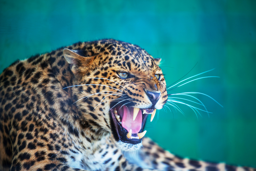 Намибия V5/OE3SZA Туристические достопримечательности Леопард