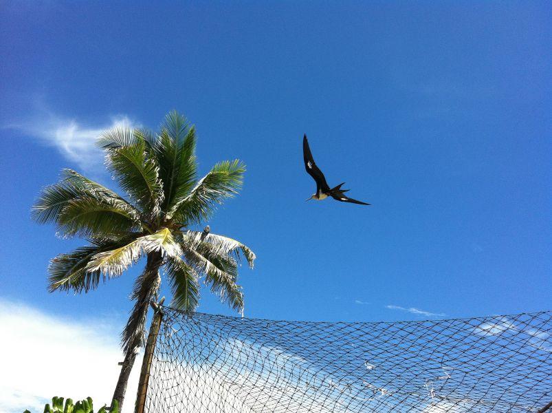 Nauru C21DA Tourist attractions spot Frigate.
