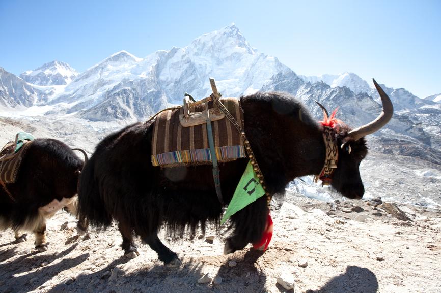 Непал 9N7AD DX Новости Яки