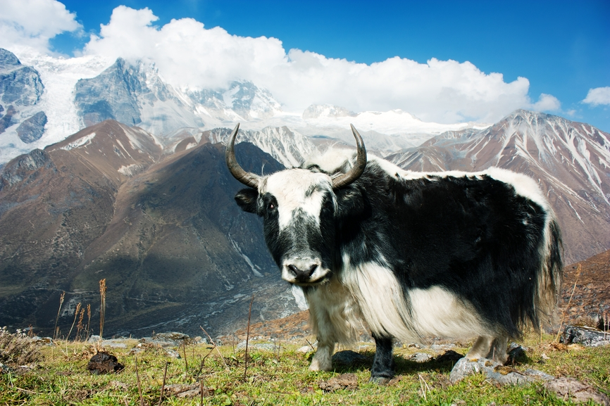 Nepal 9N7JX Tourist attractions