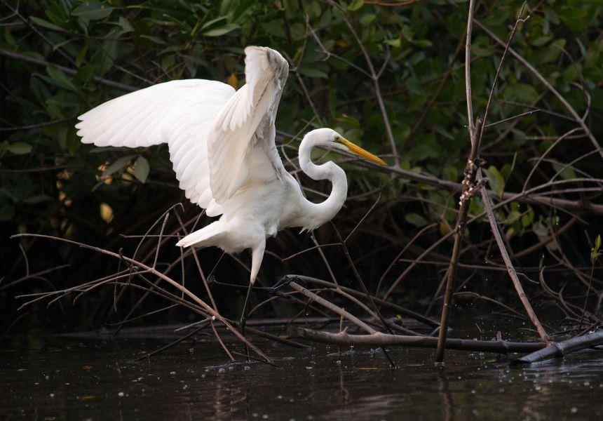 Nicaragua YN3GEA Tourist attractions spot Egret