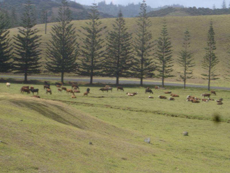 Norfolk Island JA0JHQ/VK9N
