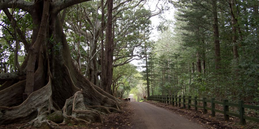 Norfolk Island VK9N/SM3TLG Tourist attractions