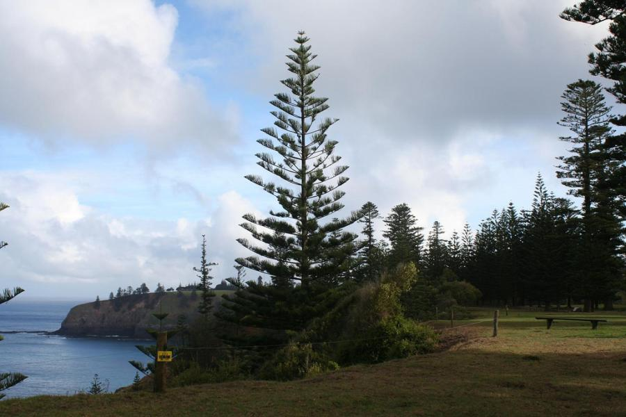Norfolk Island VK9PH Tourist attractions spot Pines and Ocean.