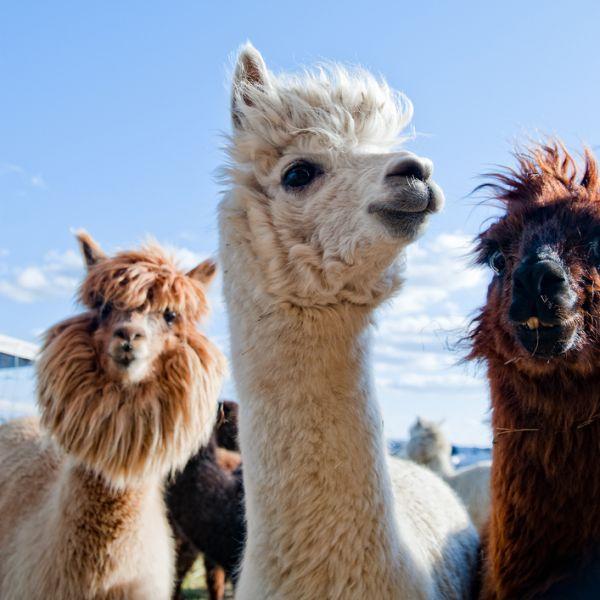 Peru OA6Q Tourist attractions