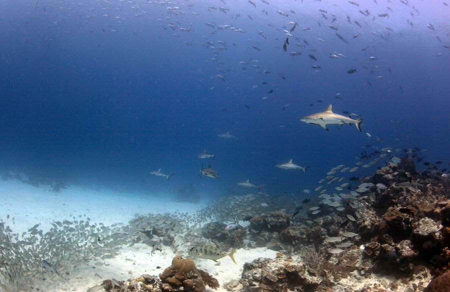 Palau T88QB Tourist attractions