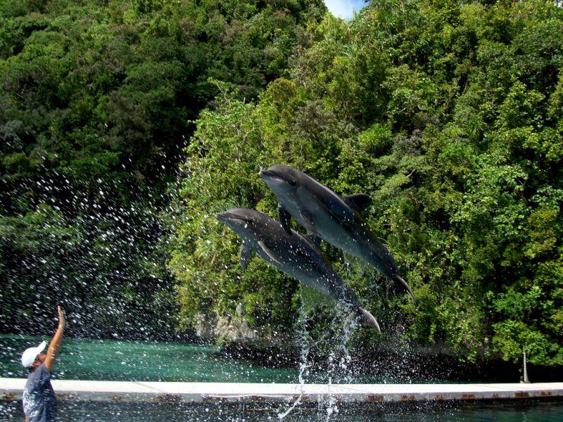 Палау T88RF Туристические достопримечательности Дельфины.