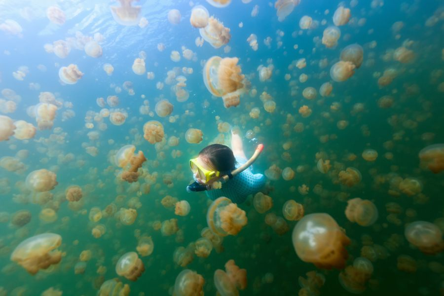Palau T88RY Tourist attractions spot