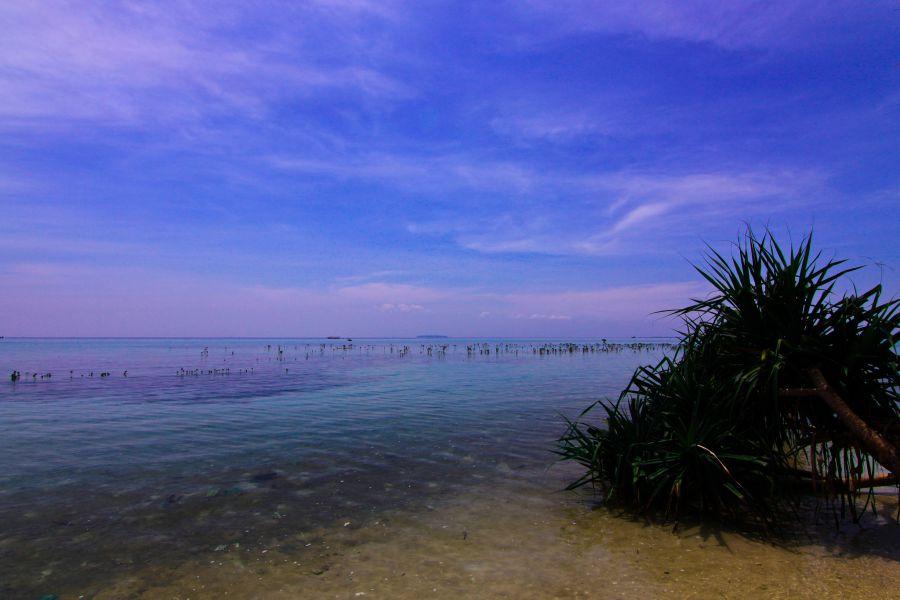 Pari Island YF1AR/0 DX News