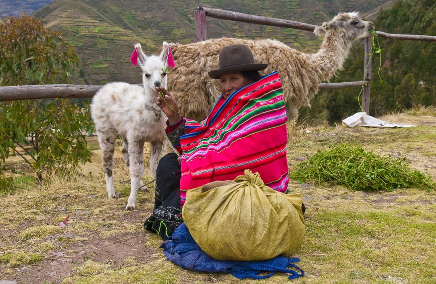 Перу OA/K7NYY