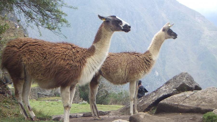 Перу OA7/DL2RMC DX Новости