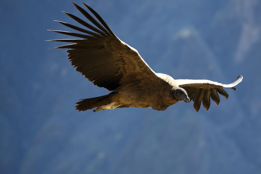 Peru OA7/DL2RMC Condor