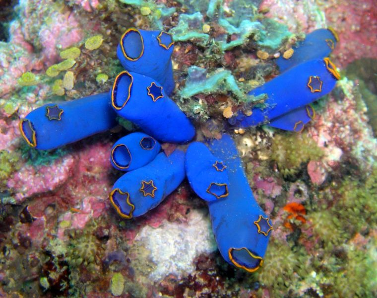 Philippines DU1WQY Tourist attractions spot Ascidian, Cebu.