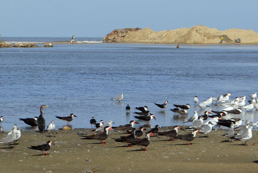 Piritu Islands 4M5I DX News