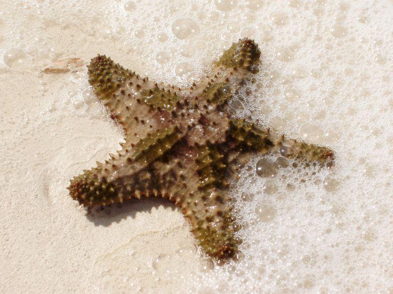 Остров Провиденсиалес Теркс и Кайкос VP5M VP5/K4QPL Туристические достопримечательности Морская звезда.