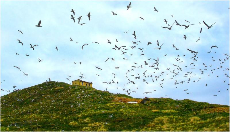 Остров Птичий R23RRC