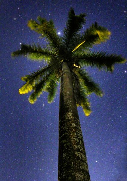 Пуэрто Рико WP3E Туристические достопримечательности Звездное небо, Пальма и Юпитер.