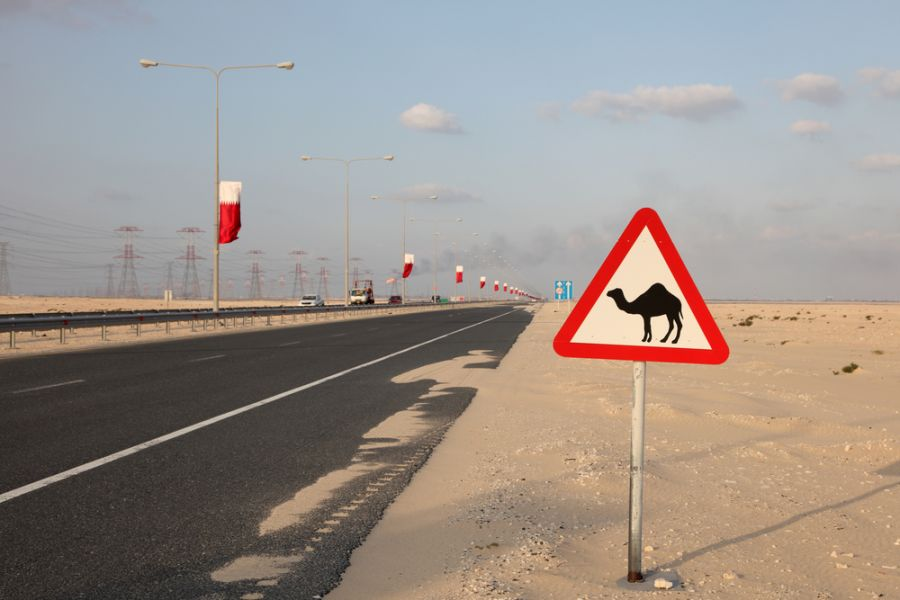 Qatar A71CV Camel warning sign