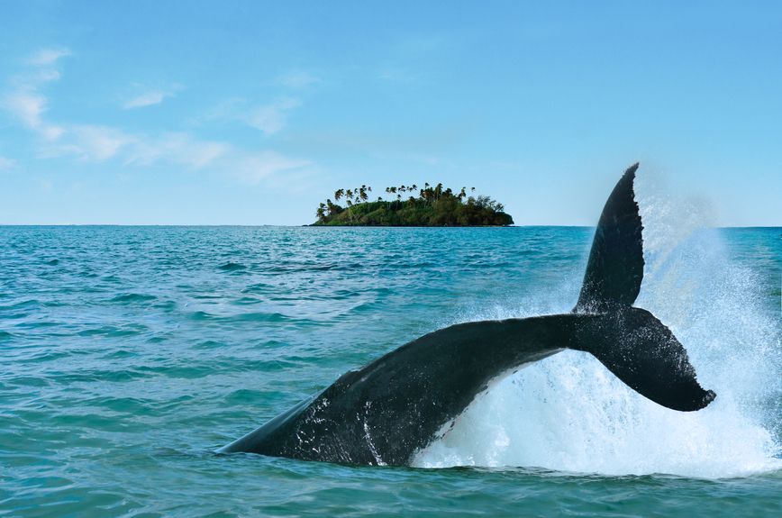 Rarotonga Island E51AGY