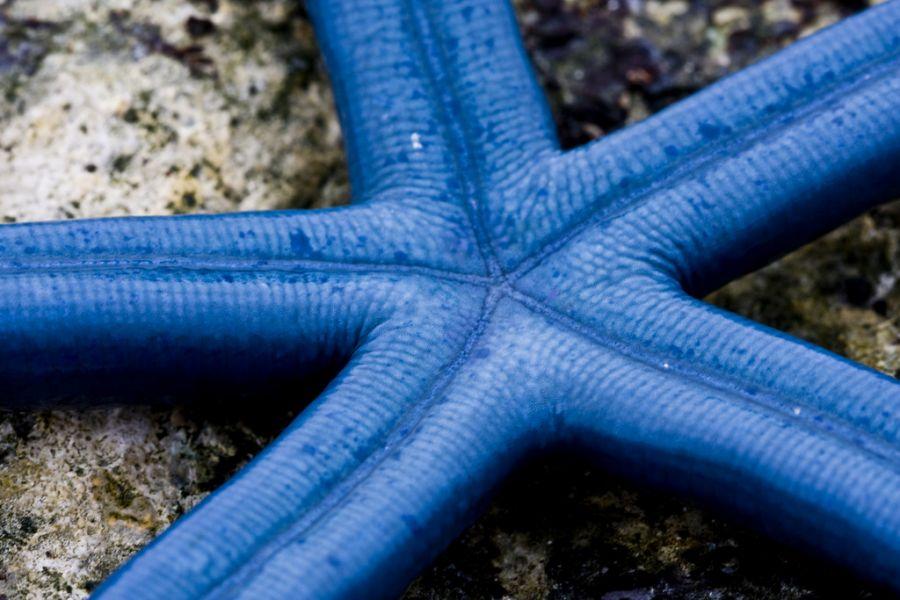 Остров Раротонга E51AQA DX Новости Голубая вивид морская звезда.