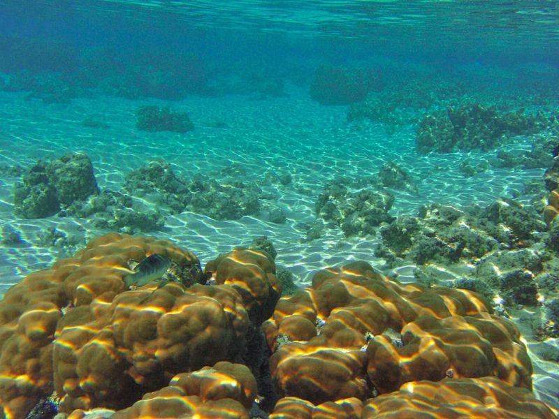 Rarotonga Island E51MRC DX News