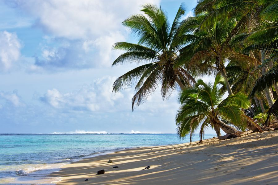 Rarotonga Island E51XYZ Coconut palms on the beach.