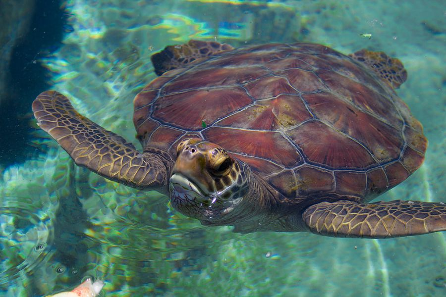 Reunion Island FR/DJ9RR DX News Kelonia