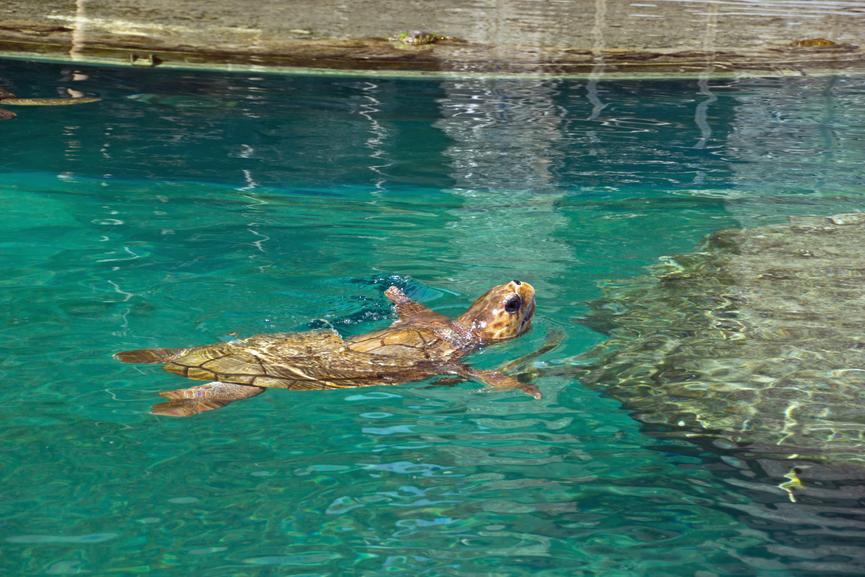 Остров Реюньон FR/F5UOW FR/F8FUA Туристические достопримечательности Морская черепаха