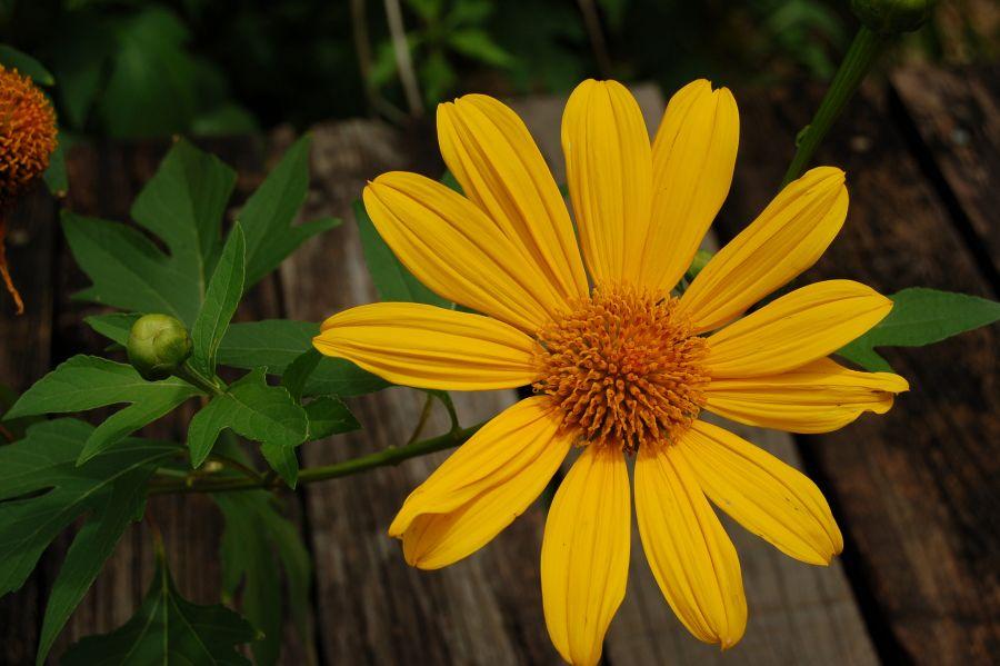 Roatan Island VE3VSM/HR9 DX News Flower.