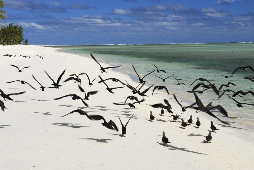 Rodrigues Island 3B9HA DX News