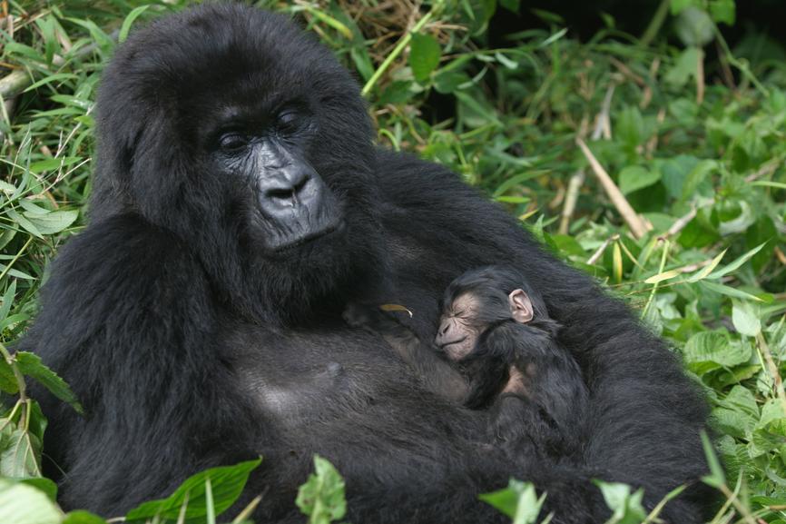 Rwanda 9X0PY Tourist attractions