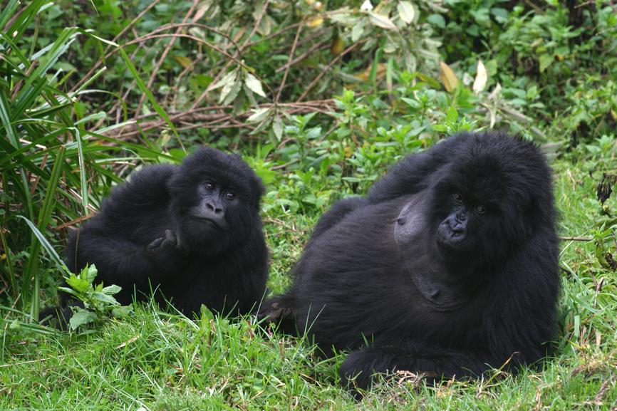 Руанда 9X0WA