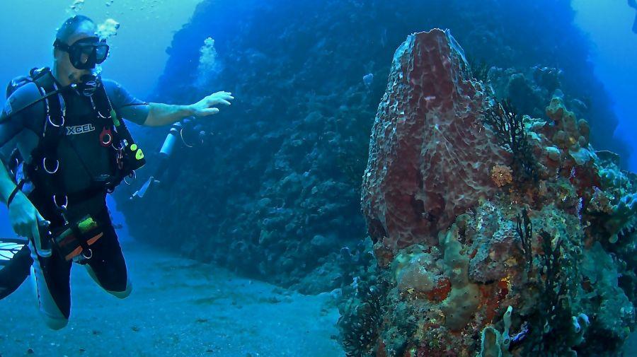Остров Саба  PJ6/DF8AN Туристические достопримечательности Подводный мир.