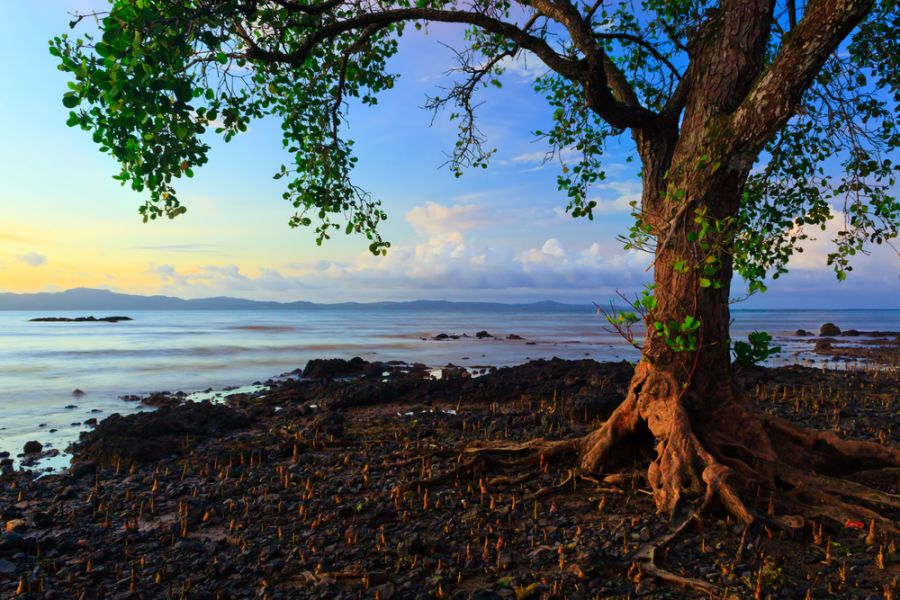 Sabah Borneo Island 9M6/JR1EFG Tourist attractions spot Harmonic colors of nature.
