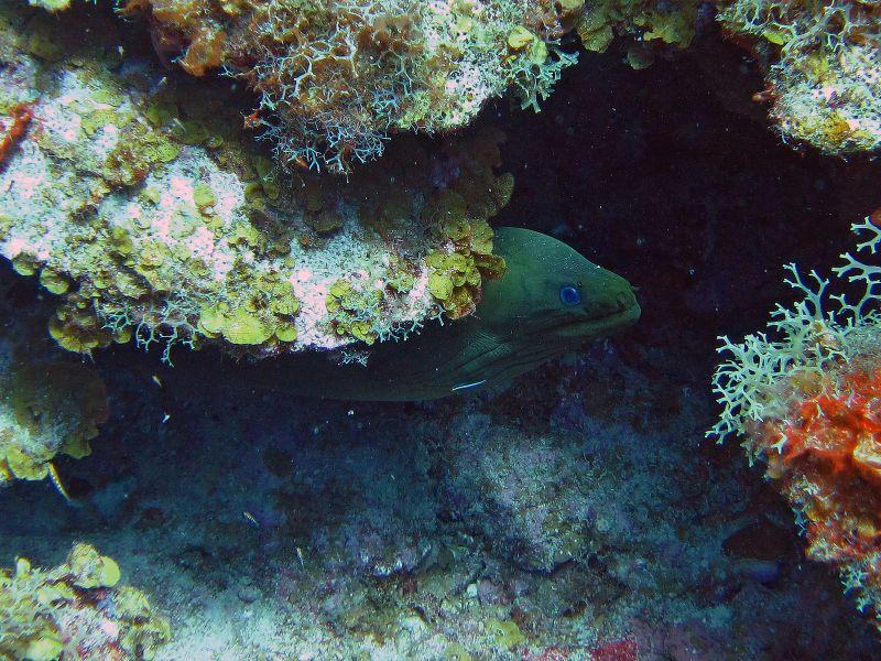 Saint Kitts Island V47TO DX News Diving.