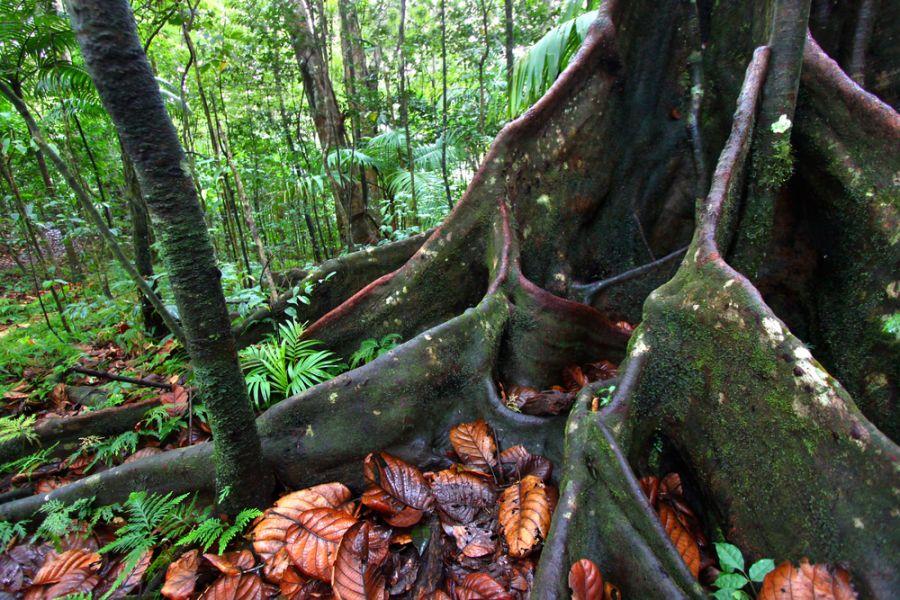 Saint Kitts Island V47TR Tourist attractions spot lush rainforest.